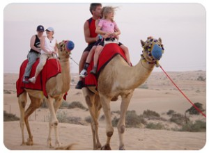 adventure dubai, camel ride dubai, Wadi bih Adventure, Falcon show – Fascinating Falcons, Sand-boarding-Dubai, Hatta Pools,