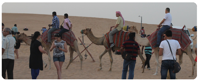 camel ride dubai, camel farm dubai, camel riding dubai, desert safari dubai, camel watching dubai,camel ride in dubai - 05